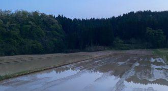 石川の田んぼ