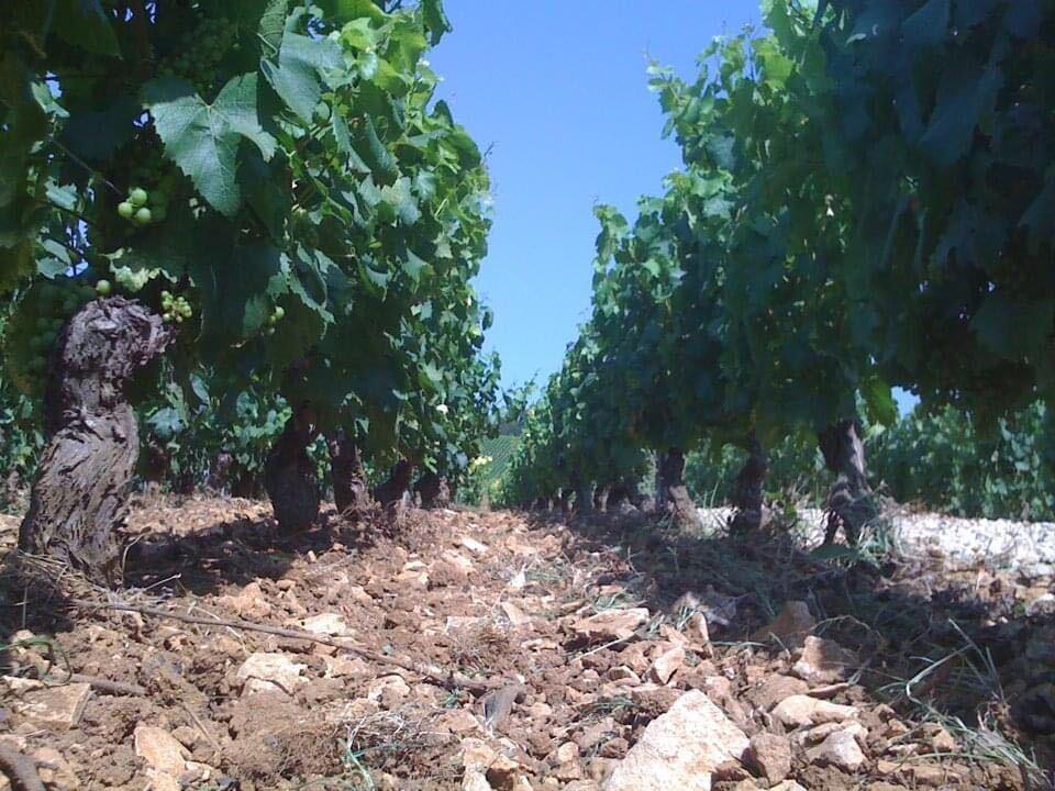 フランスのブドウ畑
