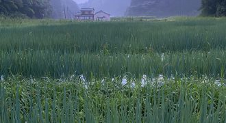 rice-field-of-ishikawa-prefecture-KNOWCH