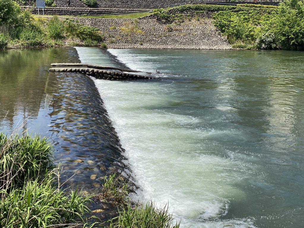 石川県金沢の夏の犀川