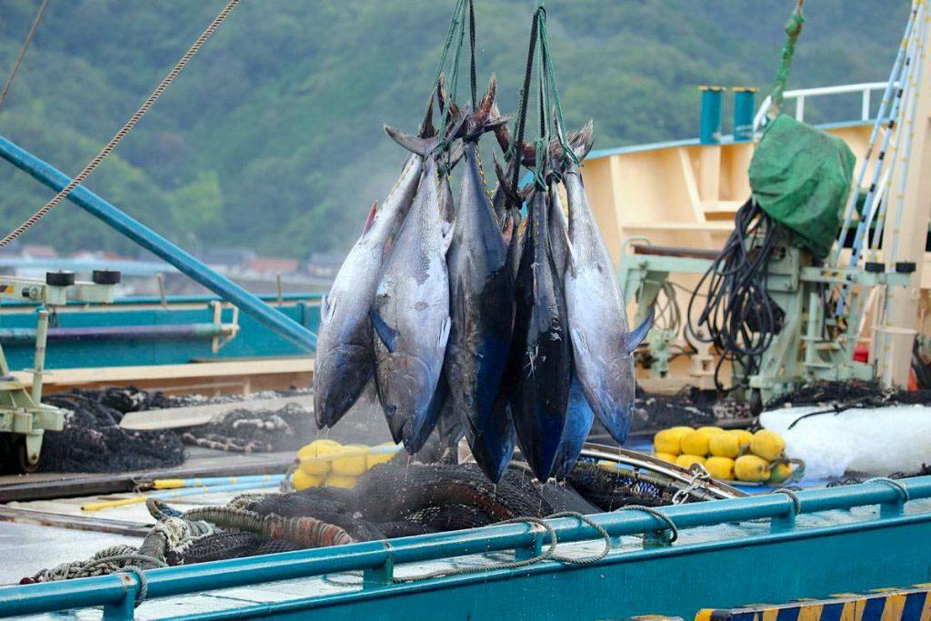 鮪を引き揚げる漁船